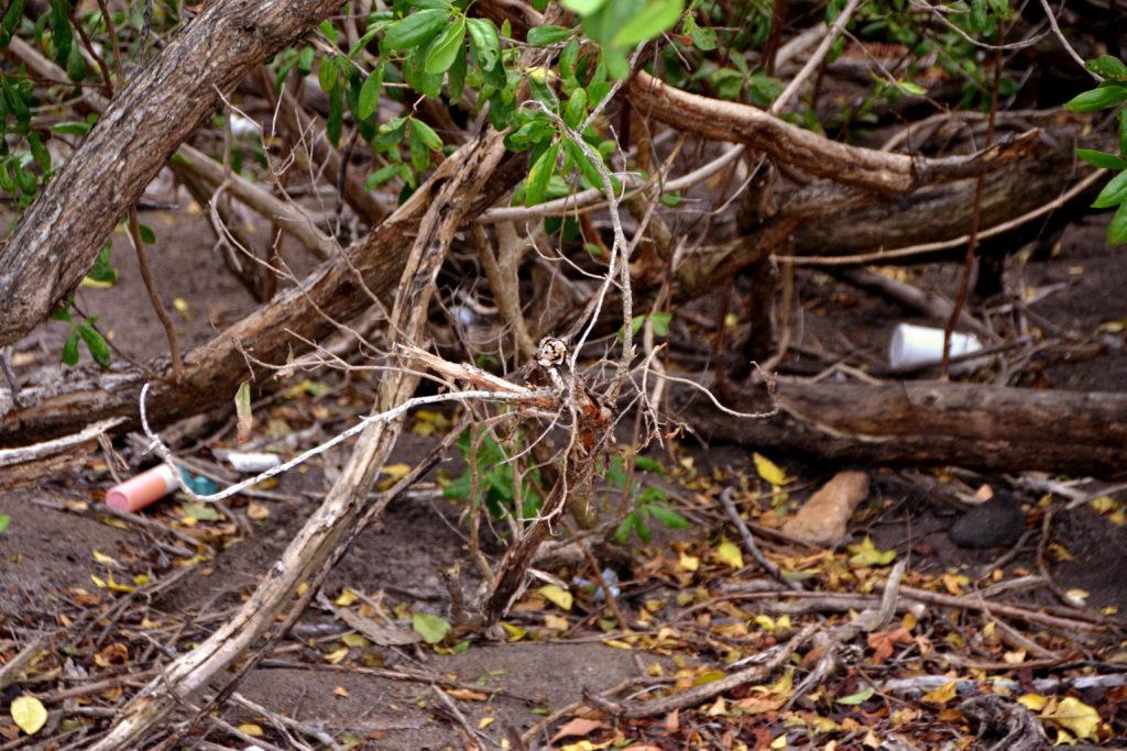 Müll im Naturschutzgebiet